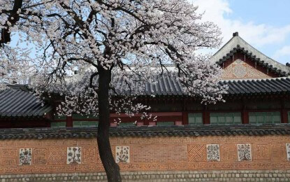 When & Where to See the 2015 Cherry Blossoms in Seoul
