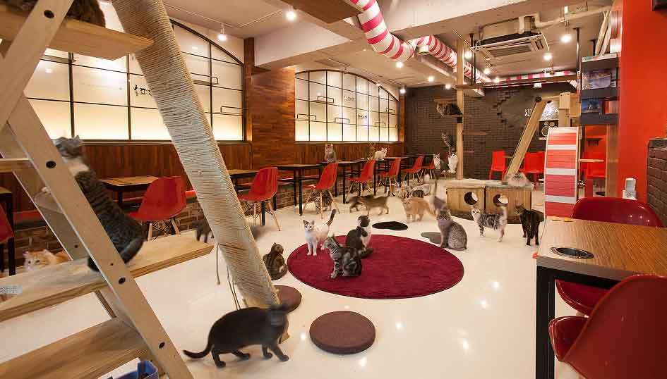 best-things-to-do-in-hongdae-cat-cafe-in-hongdae-cheongchun-cat-cafe